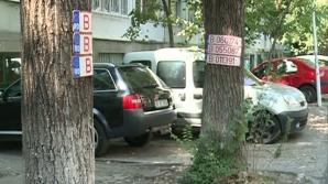 Plăcuţe de înmatriculare bătute în copaci, în sectorul 6 din Capitală