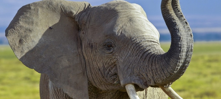 Elefant evadat de la un circ. Cum l-au găsit poliţiştii din Râmnicu Vâlcea - FOTO