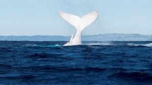 Dosarele X din Constanţa: cum a ajuns în M. Neagră balena antrenată în scop militar în fosta URSS