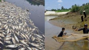 Un produs din peşte este toxic şi provoacă cancer de vezică! Se găseşte în supermarketuri