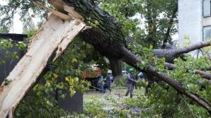 Un tânăr din Constanţa a murit după ce un copac a căzut peste el