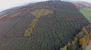 Pare o pădure obişnuită. Copacii ascund, însă, o mare ENIGMĂ. O moarte învăluită în MISTER