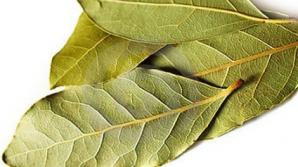 De ce trebuie să pui frunze de dafin în mâncare