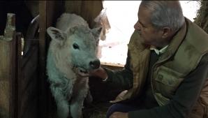 De când nu mai face politică Adrian Năstase are alte preocupări: I-a fătat vaca, ieri noapte