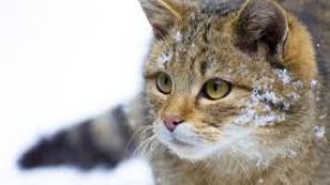 Veste bună pentru iubitorii de animale. Cotele de vânătoare, cercetate într-un dosar penal