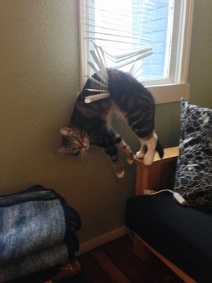 Cea mai amuzantă galerie foto cu pisici: Au luat cele mai proste decizii şi au regretat imediat!