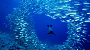 Acord pentru cea mai mare rezervație naturală marină, în Antarctica