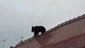 Ursul ucis la Sibiu. Se caută probe video și o femeie care apare în una din înregistrări