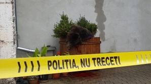Cioloș a cerut rapoarte complete de la autorități cu privire la uciderea ursului din Sibiu