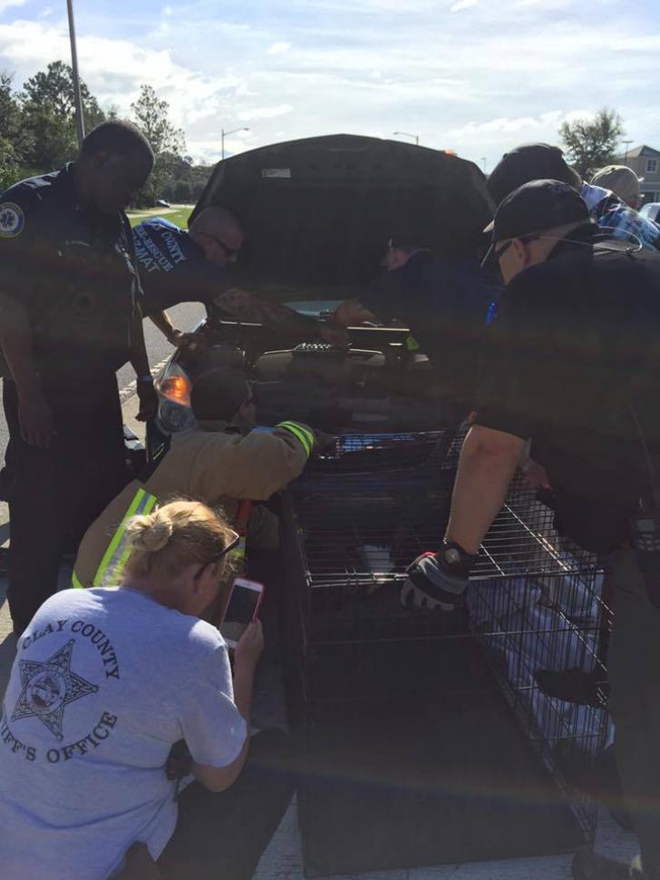 Ce au descoperit doi americani prins pe maşina lor, după trecerea uraganului Matthew