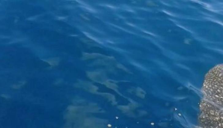 """Ieșise în larg cu barca sa, când ceva bizar a ieșit din apă. """"Se auzea un zgomot din adâncuri"""""""