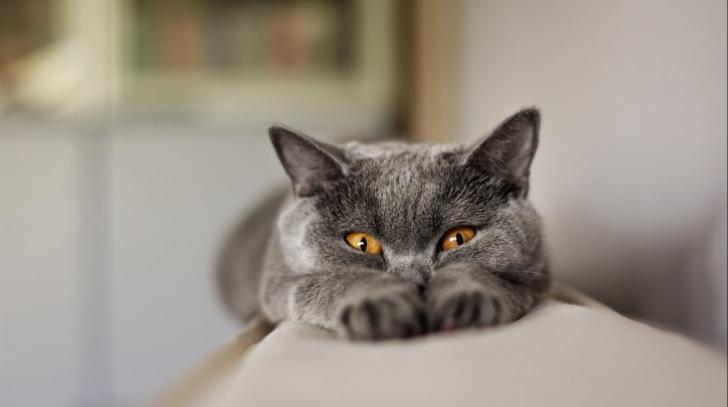 Tu ştiai? De ce au pisicile pupilele verticale?