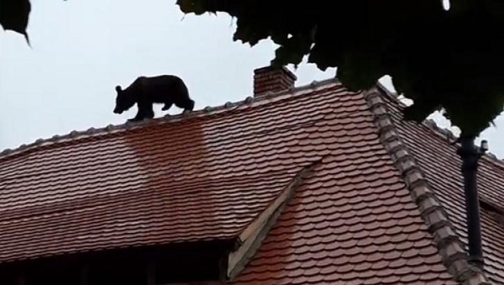 """Dosarul ursului împuşcat la Sibiu a fost mutat la Curtea de Apel Alba Iulia, """"pentru obiectivitate"""""""