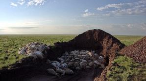 Antilope din Kazakhstan
