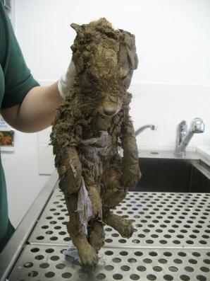 Au descoperit o creatură ciudată într-o groapă. S-au uitat mai bine şi ŞOC! Ce era, de fapt