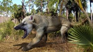 Ursul-câine, o ciudățenie a naturii