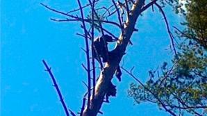 Descoperire şocantă într-un copac din Siberia. Nimeni nu ştie cum a ajuns acolo