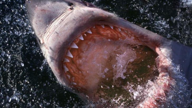A scos un rechin din apă cu mâinile goale. Ce avea răpitorul în gură. Toţi au fost şocaţi