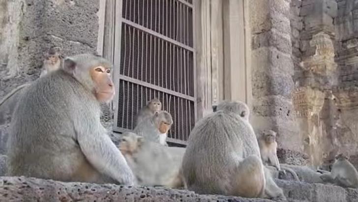 Oraşul thailandez Lopburi, gazda unei petreceri de cinci stele pentru mii de maimuţe