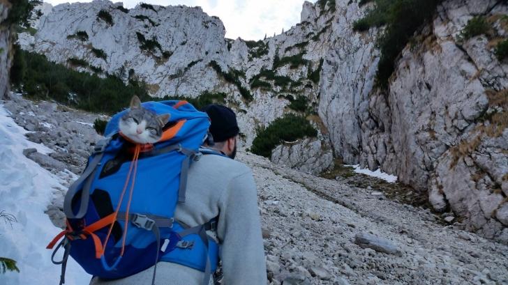 """Un pisoi a urcat cu un grup de alpinişti în munţii Piatra Craiului şi a primit numele """"Curaj"""""""