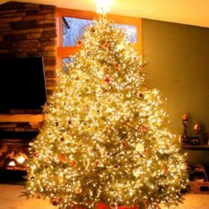 Arată ca un brad de Crăciun ca din poveşti. Însă uite ce se întâmplă când luminile se sting!