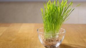 Cele mai bune leacuri cu iarbă de grâu. Previne infecţii şi tratează cancerul