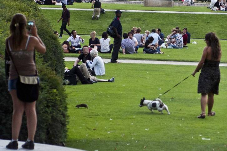 Oraşul luminii, invadat de şobolani. Principalele parcuri din PARIS, închise: cauza e...birocraţia