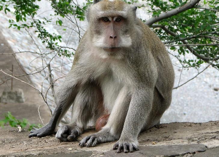 Descoperirea pe care au făcut-o cercetătorii despre macaci