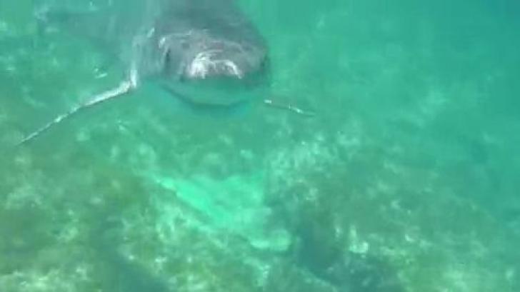 Un rechin de cinci metri s-a apropiat de el. Ce a urmat după este o minune