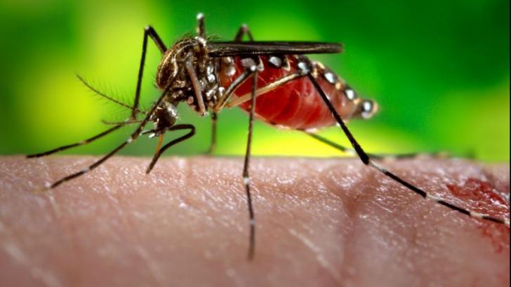 Cum să primești 13.000 de euro dacă ești mușcat de un țânțar când ești la muncă