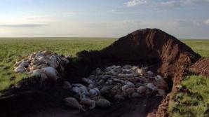 Antilope moarte