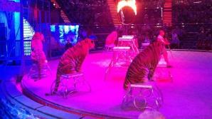 Incendiu puternic la o clădire cu lei și tigri de la Circul Globus din Capitală. 11 animale au murit