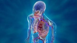 Descoperire şocantă: Un nou organ a fost identificat în corpul uman. Ce rol are?