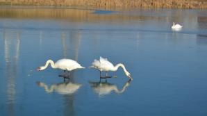 Virusul gripei aviare, confirmat la Constanţa