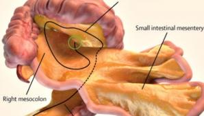 Nou organ în corp