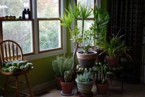 Cum să îngrijeşti plantele de apartament pe timp de iarnă