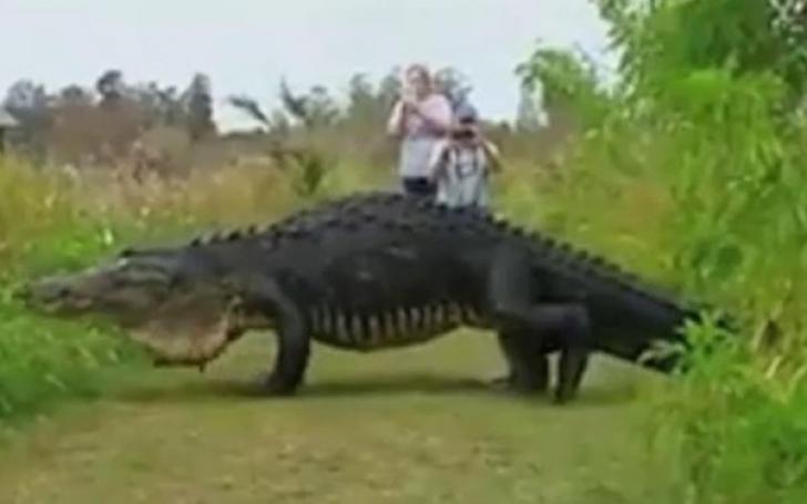 Imagine de coşmar: ce reacţie au avut turiştii când s-au întâlnit cu reptila URIAŞĂ