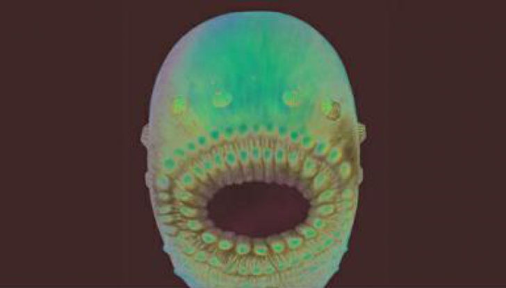 O echipă internațională de cercetători a descoperit probabil ''cel mai vechi strămoș al omului''