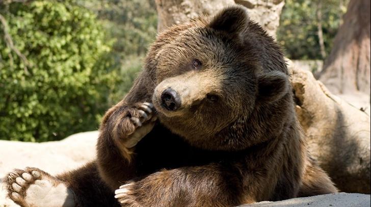 Decizie bizară luată de Slovenia. Guvernul a autorizat vânarea a 93 de urși bruni și opt lupi