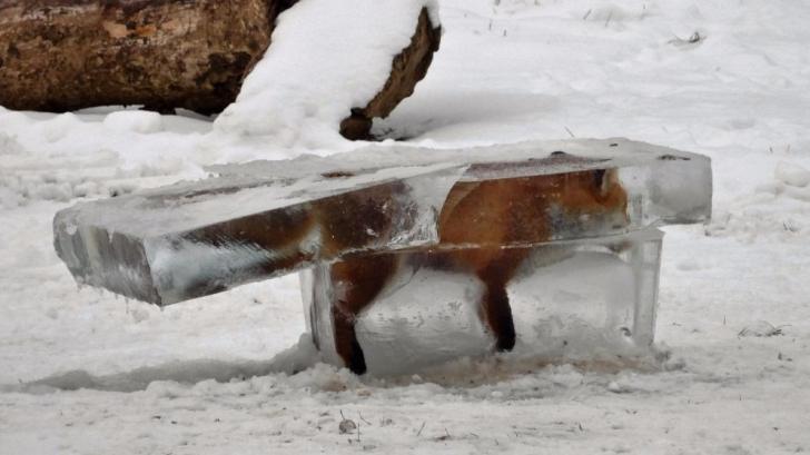 Descoperire şocantă, în Dunăre, într-un bloc de gheaţă - FOTO