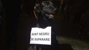 Câine protestatar