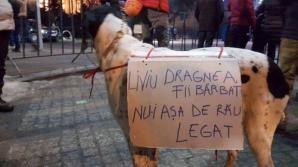 """""""Liviu Dragnea, fii bărbat, nu-i aşa de rău legat"""". Fotografia care a amuzat întreg Facebook-ul"""