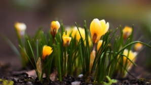 Echinocțiu de primăvară 2017