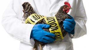 Gripa aviară a ajuns în Bucureşti: Virusul, depistat la două păsări moarte, în Parcul Tineretului