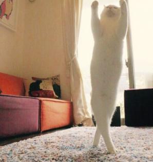 Mirko, motanul dansator - noua obsesie a internetului. Mişcările sale, fabuloase!