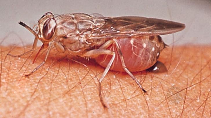 Cele mai mici și periculoase vietăți de pe Terra