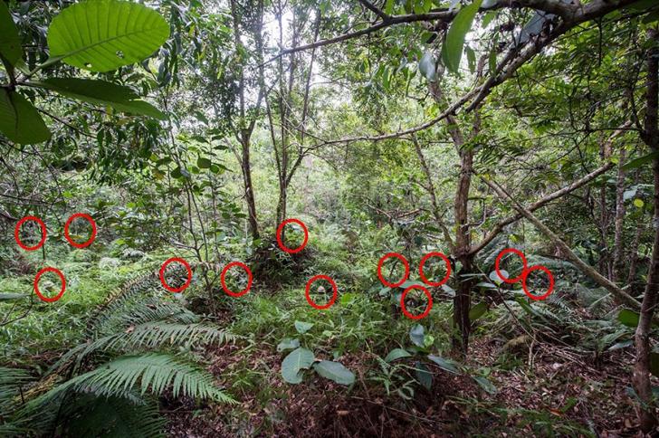 Testul pe care puțini oameni au reușit să-l rezolve! Poți găsi cei 12 soldați camuflați în junglă?