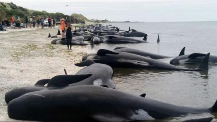 Balene eşuate