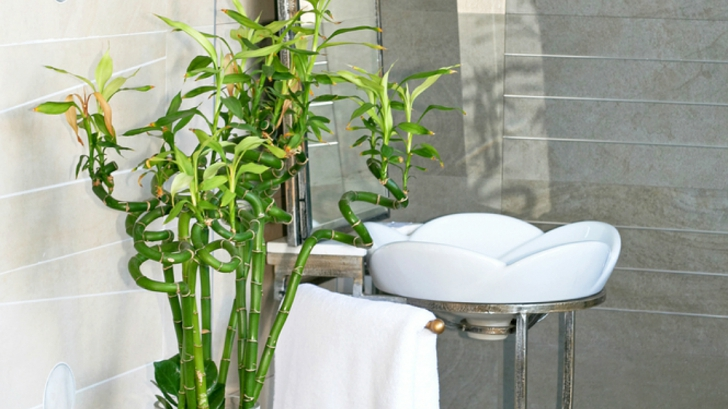 Decorează-ți baia cu plante exotice