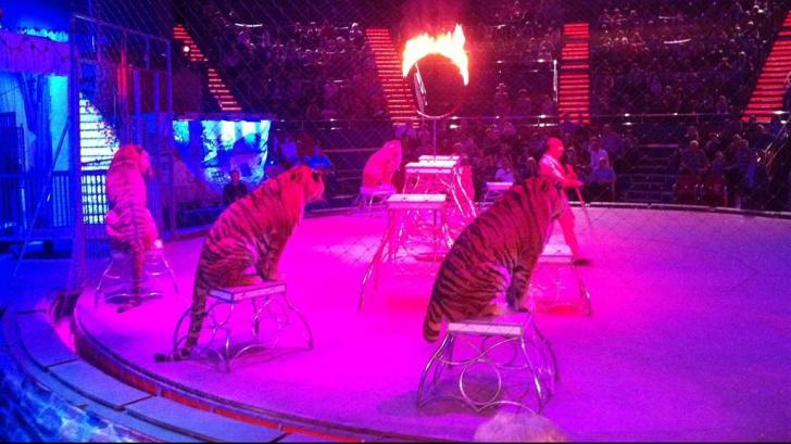 Ultimul spectacol cu animale la Circul Globus din Capitală a avut loc duminică